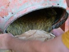 So lange wie nötig - so kurz wie möglich mischen! Aufhören, sobald das Impfmittel gleichmäßig auf dem Saatgut verteilt ist. Foto: Taifun Tofuprodukte