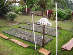 Durch die Vermehrung vielversprechender neuer Kreuzungen im Winterzuchtgarten in Costa Rica wird der Zuchtfortschritt bei Soja erheblich beschleunigt. Foto: V. Hahn, Universität Hohenheim