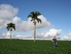 Paraná 2013: Für die Recherchen sind wir um die halbe Welt gereist. Foto: Taifun Tofuprodukte